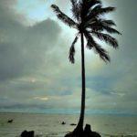 ဧရာကမ္းေျခ အုန္းပင္အလွ